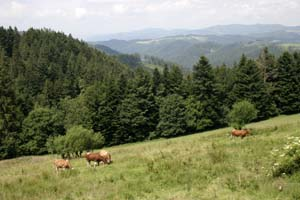Black Forest view near Triberg