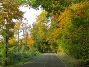 Driving through the forest, an unending series of postcard moments of fall foliage
